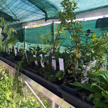Voorbereidingen voor het eerste jaar eetbos 2015