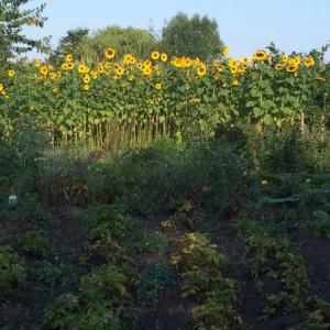 Eetbos 'Het Nieuwe Begin' 2015