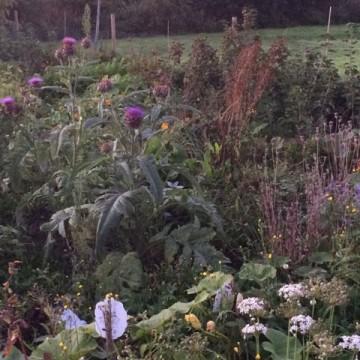 Wat is een eetbos? En: zo ontstond mijn eetbos 'Het Nieuwe Begin'