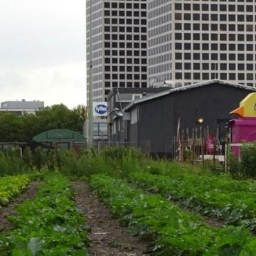 Wat het is en wat het kan of moet worden Stadslandbouw in Europa – VILT