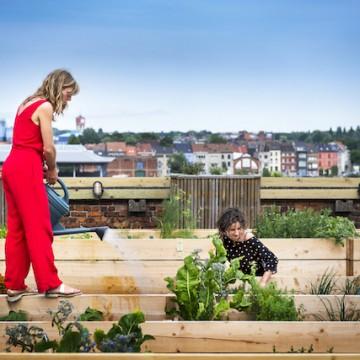 Help je mee dit dak om te toveren tot een groene oase? | Roof Food