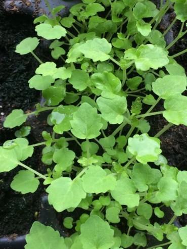 Nieuwe zaailingen voor het eetbos
